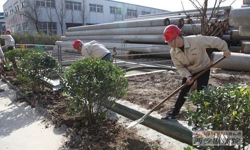 有色万通开展植树增绿活动
